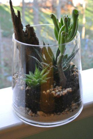 DIY Succulent Terrarium Ideas 1