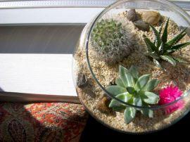 DIY Succulent Terrarium Ideas 9