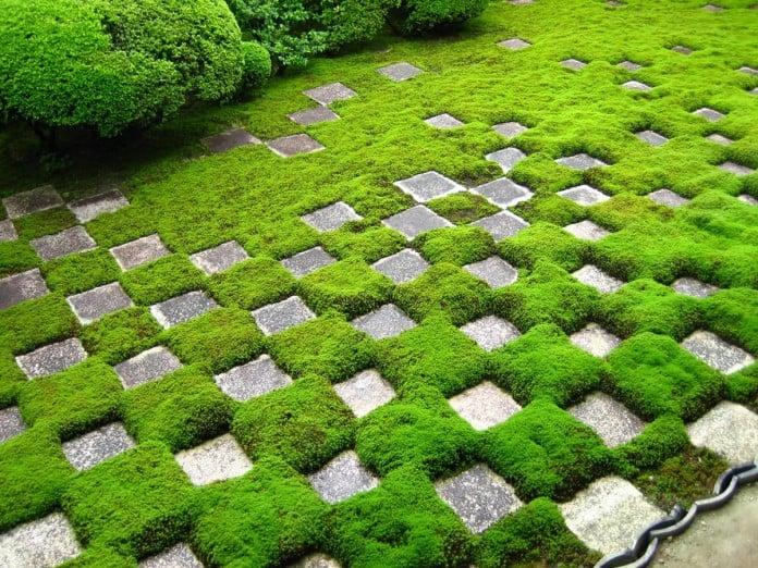 Above Ground Water Garden