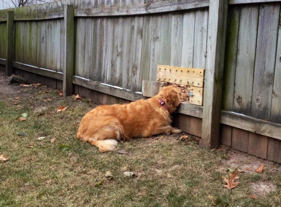 diy dog fence ideas and installation