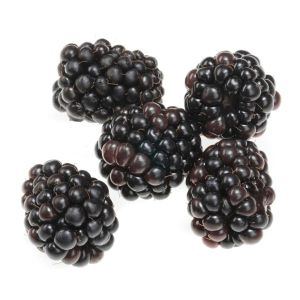 BLACKBERRIES-FRESH-PRODUCE-GROUP-LLC.jpg