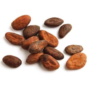 Cacao-bean-Fresh-Produce-Group-LLC8.jpg