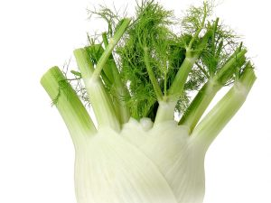FENNEL-BULB-FRESH-PRODUCE-GROUP-LLC.jpg