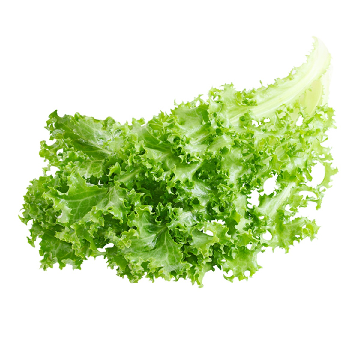 FRISEE-ENDIVE-FRESH-PRODUCE-GROUP-LLC.jpg