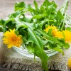 DANDELION-GREEN-FRESH-PRODUCE-GROUP-LLC3.jpg
