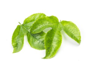 Passion Fruit Leaves