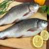 Rohu Fish- Order Fresh & Delicious Seafood Fish Online Satara - Fresh Protino