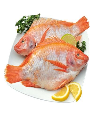 Tilapia fish ( तिलापिया ) - orange colour fish