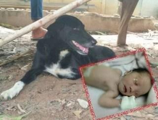 Rescue2Bdog