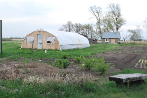 The hoop house and perennial gardens, Week 21