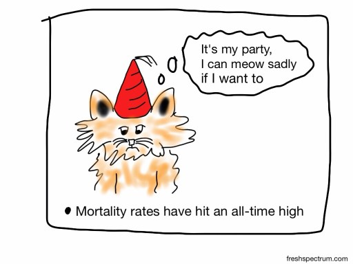 Sad kitty and mortality