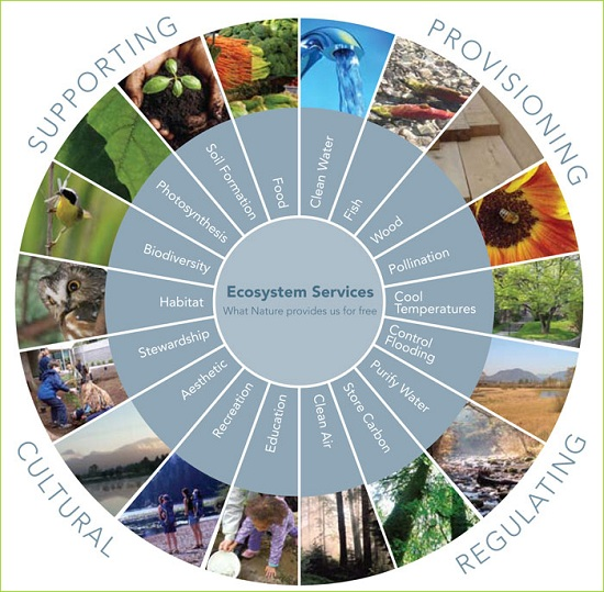 Image result for ecosystem services