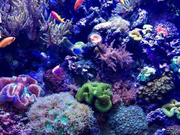 Daytrip to the Monterey Bay Aquarium