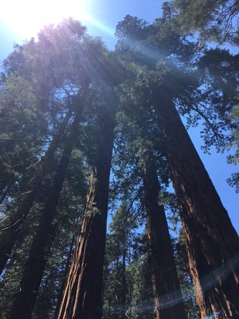 redwood canyon hart loop