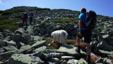 Hund beim Karpaten Wandern