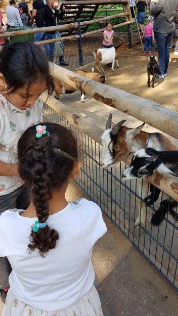 Oh wie süß! Besuch im Nürnberger Zoo