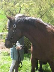 2007 : arrivée à l'élevage