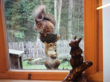 A photo Julie took of real red squirrels with her ornaments