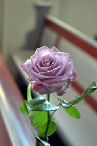 En stilla ros i kvällens färgtema