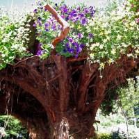 უკუღმართი ხეები ალასკაზე