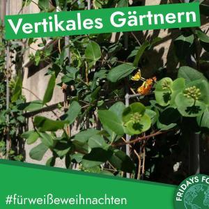 Türchen 20: Vertikales Gärtnern – Recycling von PET Flaschen