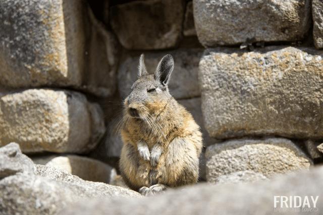 Machu Picchu Wildlife