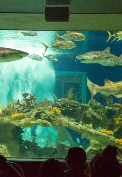 Odysea Aquarium Family Date