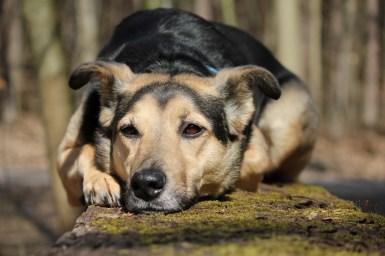 Hund Fama kimg_2195