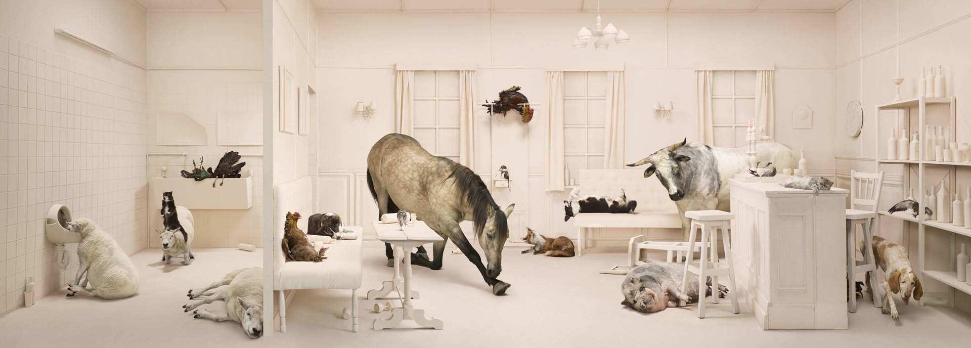 ANIMALCOHOLICS