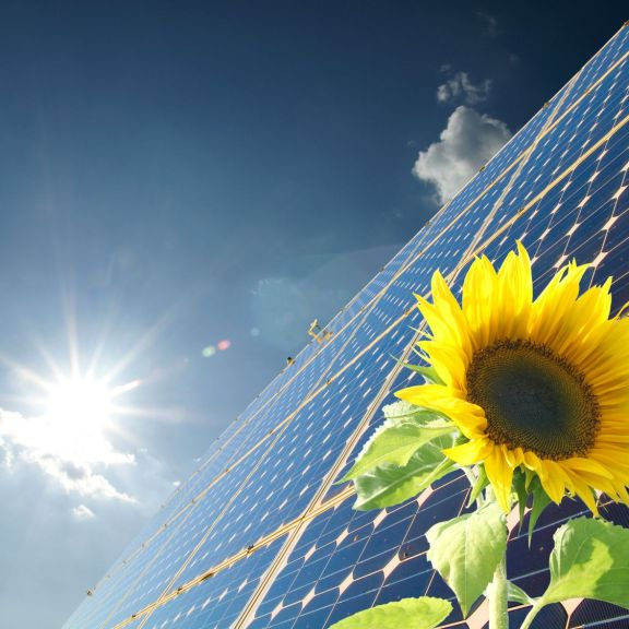 Solar energy with flower