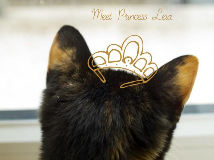 Meet our new member Princess Leia