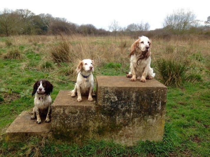 Walks in Surrey :)