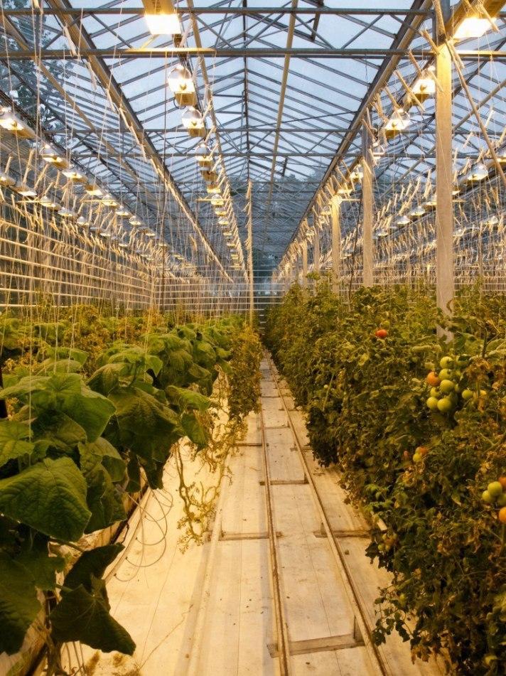 Tomato farm, Iceland