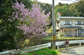 Вишнево дърво / Cherry tree