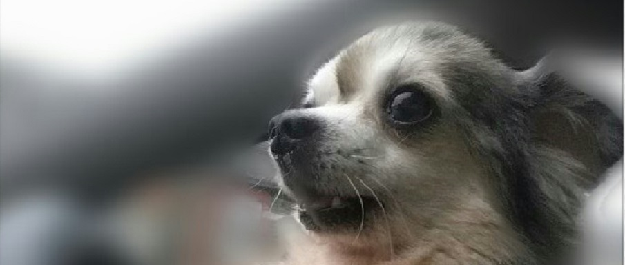 Dogs Needing Foster Homes Uk