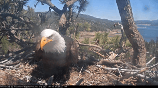 Eagle Update Pictures