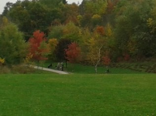 cedarvale-ava-plantings-end-of-planting-far-view-with-colors