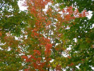 cedarvale-fall-colours-059