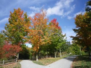 cedarvale-leaves-2015-005