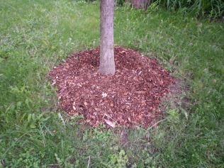 Tree mulched off Arlington