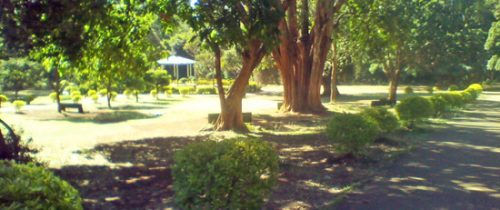 View of Markhamia trees, and lawns at City Park by cngarachu