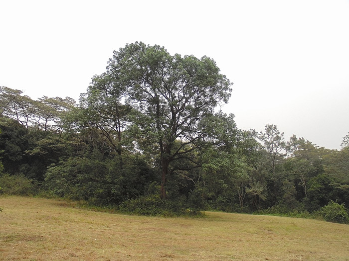 City Park treeline from Forest Road @cngarachu