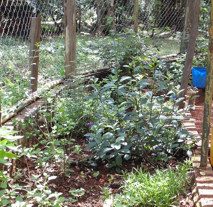 Section of Pollinator garden. Photo by cngarachu