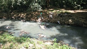 Plastic accumulated in the river
