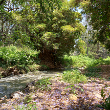 kibagare river leading into sunken garden