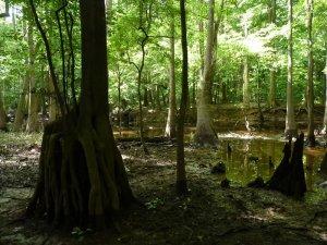 Site 11 Cedar Creek Slough
