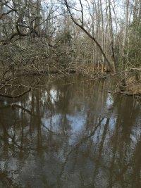 Cedar Creek from Bridge I
