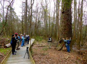 Richland County Pine