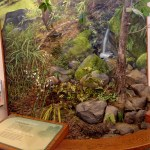 Seeps and Springs Exhibit