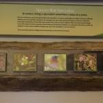 Species that Specialize exhibit